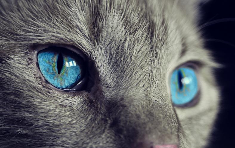 cat-1285634_1280